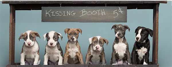 rescue dog kissing booth