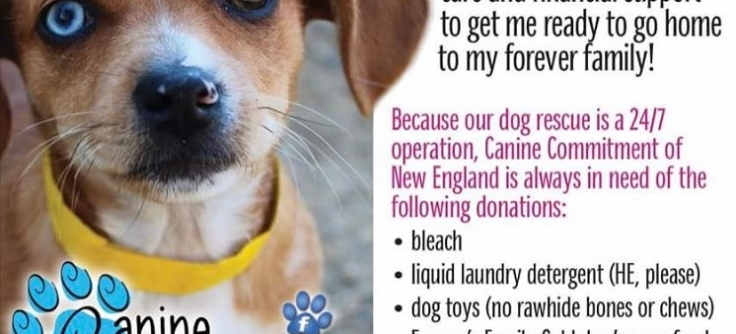 Canine Commitment Of New England Rescue Dog And Puppy Adoption